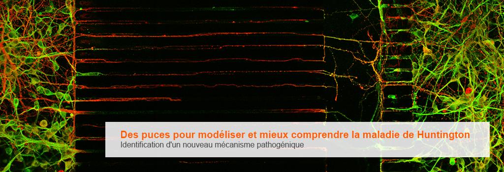 Caroussel_18.01.5_Saudou_Puce.jpg